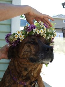 dinah flowerchild